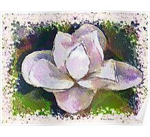 Painted Magnolia Blossum Poster