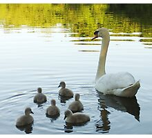 My beloved swans! Photographic Print