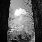 Viaduct Northern Ireland by Sarah Cowan