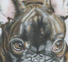 Little Frenchie. Sticker