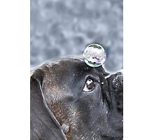 Bubble On My Head -Boxer Dog Series-  Photographic Print