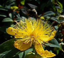 busy bumble by kerityan