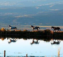 Reflection of Horses by Eric Rundle