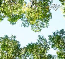 Aspen Treetops Sticker
