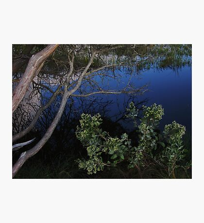 Ecological Wonder Photographic Print