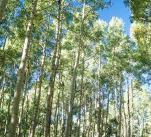 Aspen Tree Trail Sticker