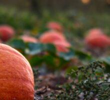 Orange Pumpkin Patch Sticker