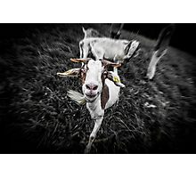 Crazy Goat! Photographic Print