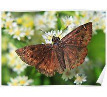 Flower Moth Poster