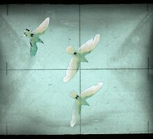 Doves in Sight by Dogmamom