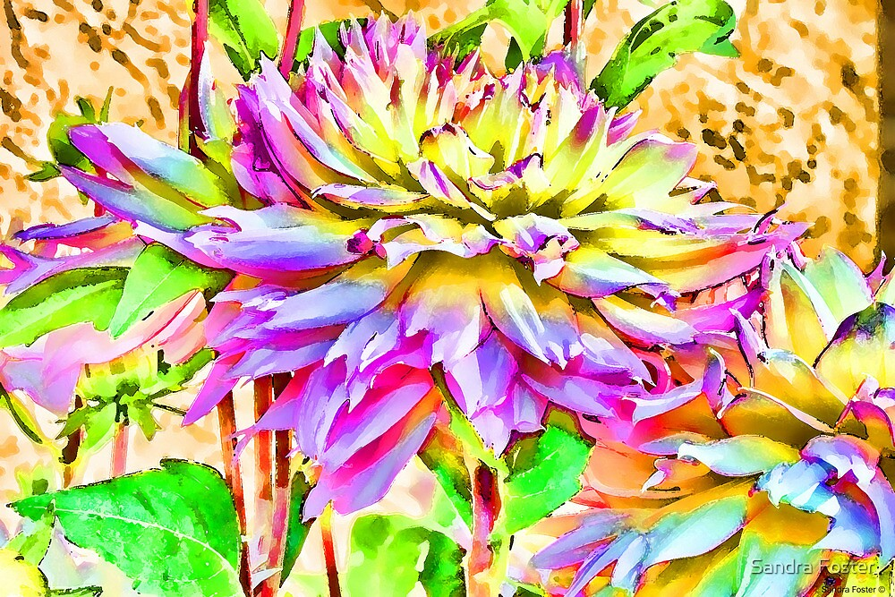 Dahlias In An Artistic Version by Sandra Foster