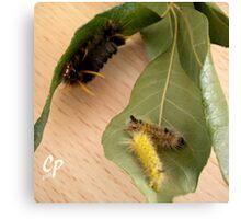 Caterpillars At The Buffet  Canvas Print