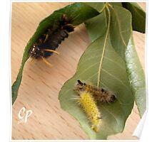 Caterpillars At The Buffet  Poster