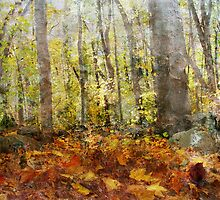 Autumnal Woods by enchantedImages