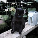 Andrea's Cat: Max In The Garden by Sandra Foster