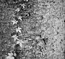 Climbing Vine Black and White by Liz Smith