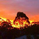 Sunset Chez Moi - Sunshine Coast, Australia by Angela Gannicott