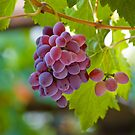 Red Grape by Ivo Velinov