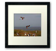 Parachuting puffins Batman!! Framed Print