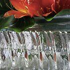 Clivia in glass by waxyfrog