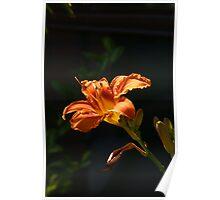 Flower against a dark background Poster