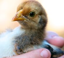 New Chick by Renee Hubbard Fine Art Photography