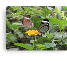 Two By Two Flutterby Canvas Print