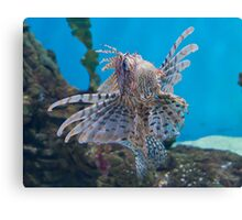 Fish in a Tank Canvas Print