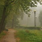 Foggy morning in park by mski
