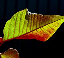 Green and red. by Baska
