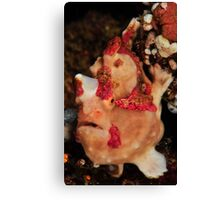 Warty  Canvas Print