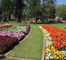 Colorful garden beds, Queens Park, Toowoomba by Marilyn Baldey