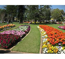 Colorful garden beds, Queens Park, Toowoomba Photographic Print