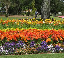 Colorful flowers at Queens Park, Toowoomba by Marilyn Baldey