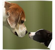 Nose To Nose Dogs 2 Poster