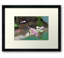 Glasswing on Flower Framed Print