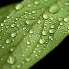 Green VI by Mihaela Limberea