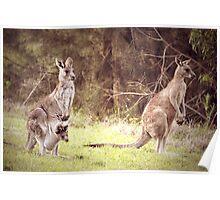 The Kangaroo Family Poster