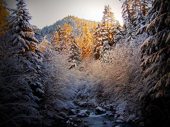 Just One Of Thoes Things ~ Brice Creek ~ by Charles & Patricia   Harkins ~ Picture Oregon