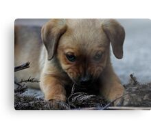 Don't mess with me . . . Metal Print