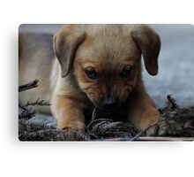 Don't mess with me . . . Canvas Print