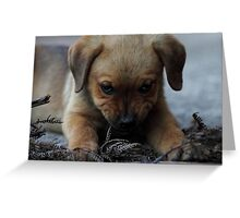 Don't mess with me . . . Greeting Card