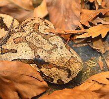 Hidden Snake by Jacqueline van Zetten