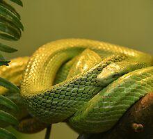 Green Tree Snake by Jacqueline van Zetten