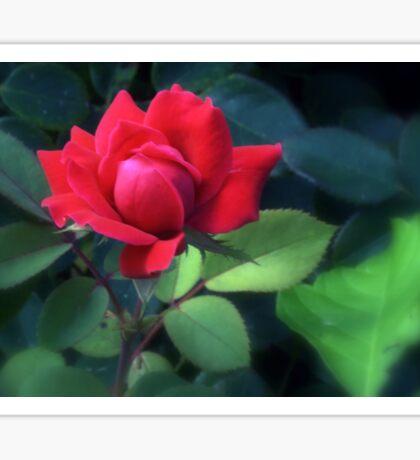 Wild Rose Sticker