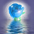 Rose Reflection by maf01