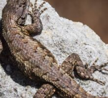 Mountain Lizard Sunbathing Sticker