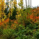 Oregon Fall Colors by Charles & Patricia   Harkins ~ Picture Oregon