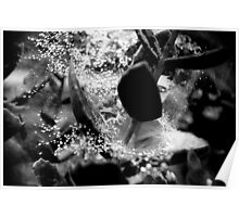 black and white rain on spider web Poster