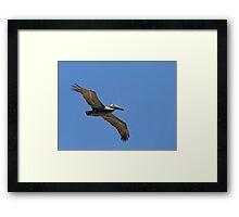 Pelican Soaring Close Framed Print